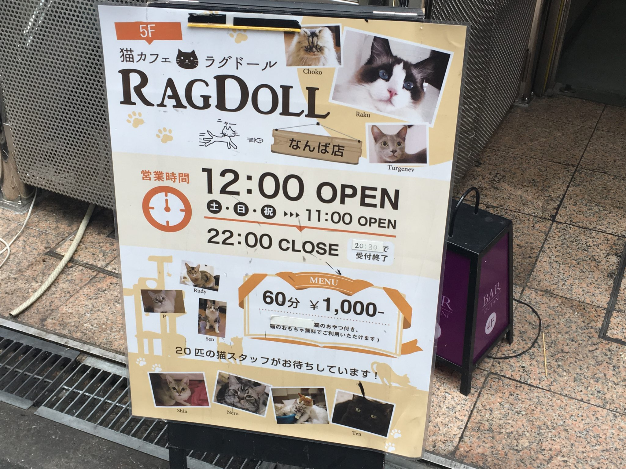 Neko cafe rag doll